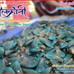 Shrimp Culture - Skill Development Program
