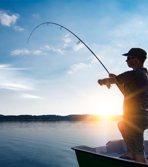 Fish Tourism